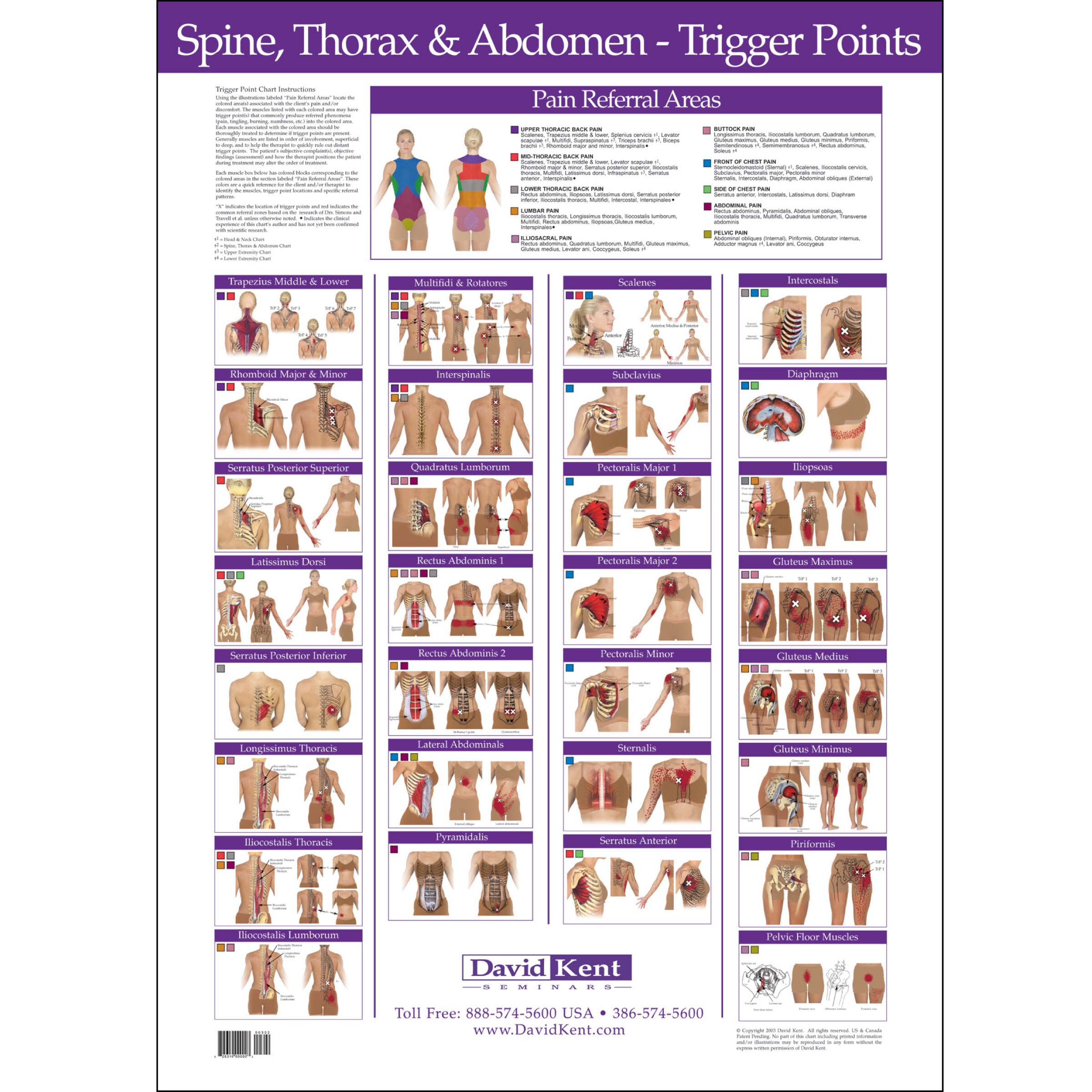 What is a trigger point chart?